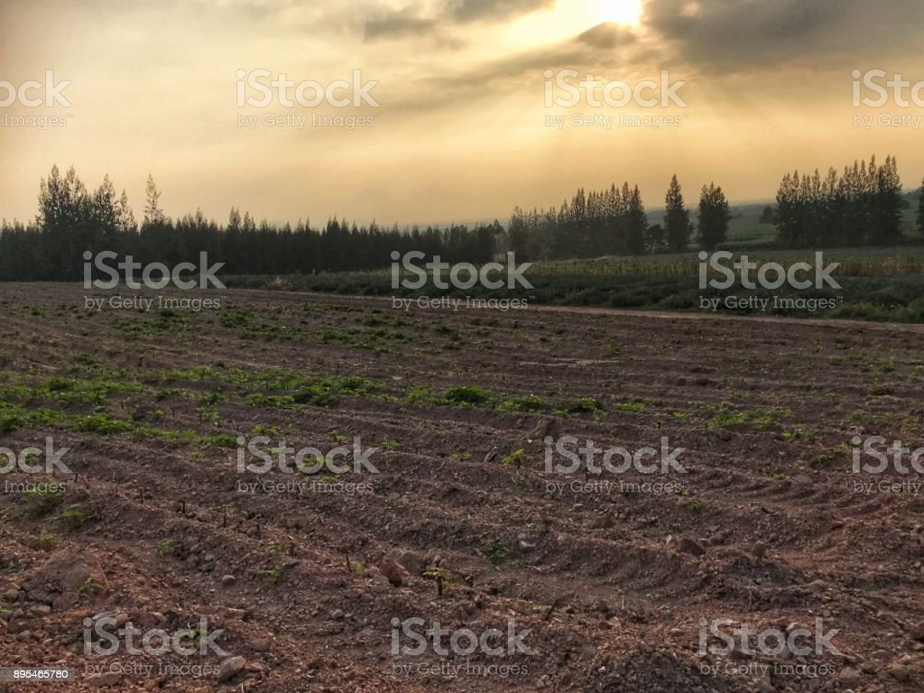 Blank field with tractor tracked preparing for growing new crops. stock photo