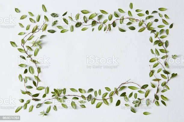 Blank frame with leaves picture id663074264?b=1&k=6&m=663074264&s=612x612&h=t7sadri1 blrpmfwssfcs6adt0vliycbtqodadvlxjs=