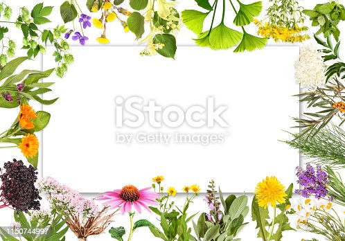 istock Blank label with medical plants 2 1150744997