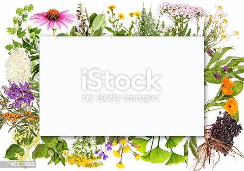 istock Blank label with medical plants 1140510669