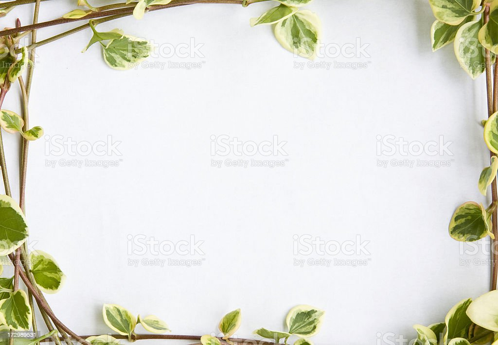 Blank page with ivy frame royalty-free stock photo