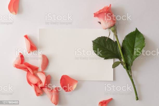 Blank paper greeting card envelope with rose and petals on a white picture id1217869483?b=1&k=6&m=1217869483&s=612x612&h=lnsjo8d9tiejs 4ikv60tgyw7w oeuq7as0ejc6jnzu=