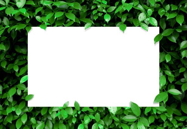 papier blanc sur le fond vert tropical de feuille - jungle menu photos et images de collection