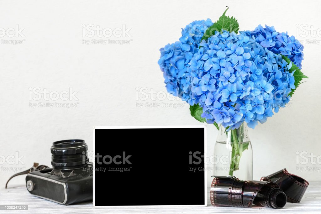 blank photo frame and vintage retro camera with beautiful bouquet of blue hydrangea flowers and rolled film stock photo