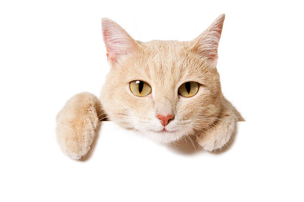 Blank sign funny cat picture id182455766?b=1&k=6&m=182455766&s=612x612&w=0&h=ww1ucre3cy9q4rtpqyyrvfxp9sa xny7es3z3u9qujk=