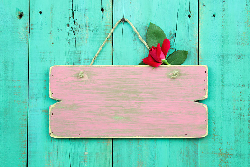Blank sign with red rose bud