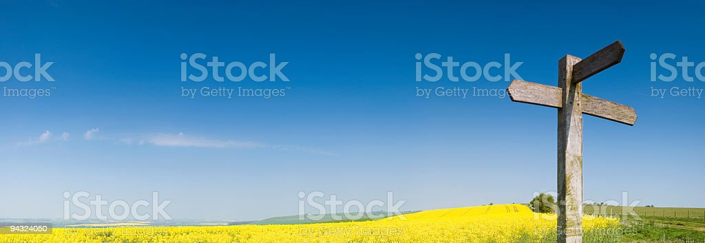 Blank sign, yellow crop, blue sky stock photo