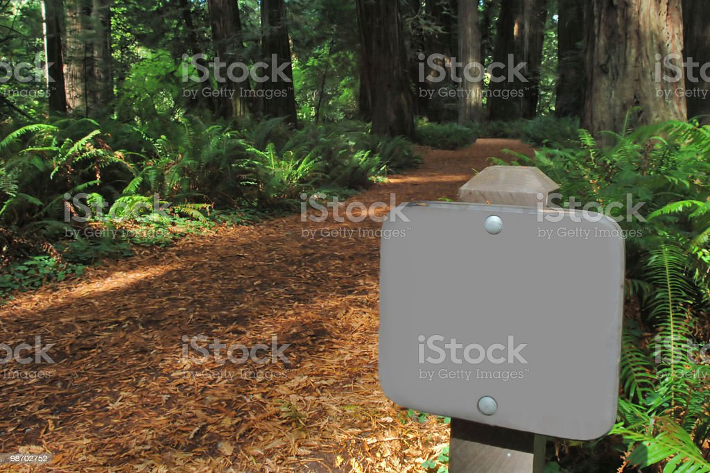 blank trail sign in giant redwood forest royalty-free stock photo