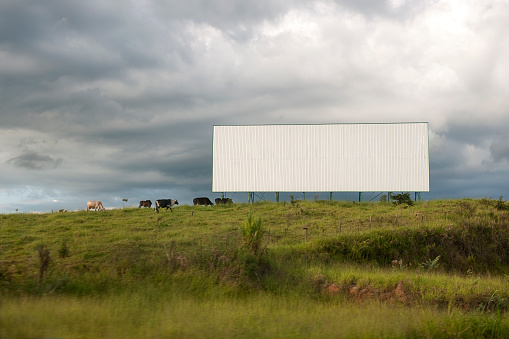 Roadside blank billboard and cows grazing on lush green pasture.