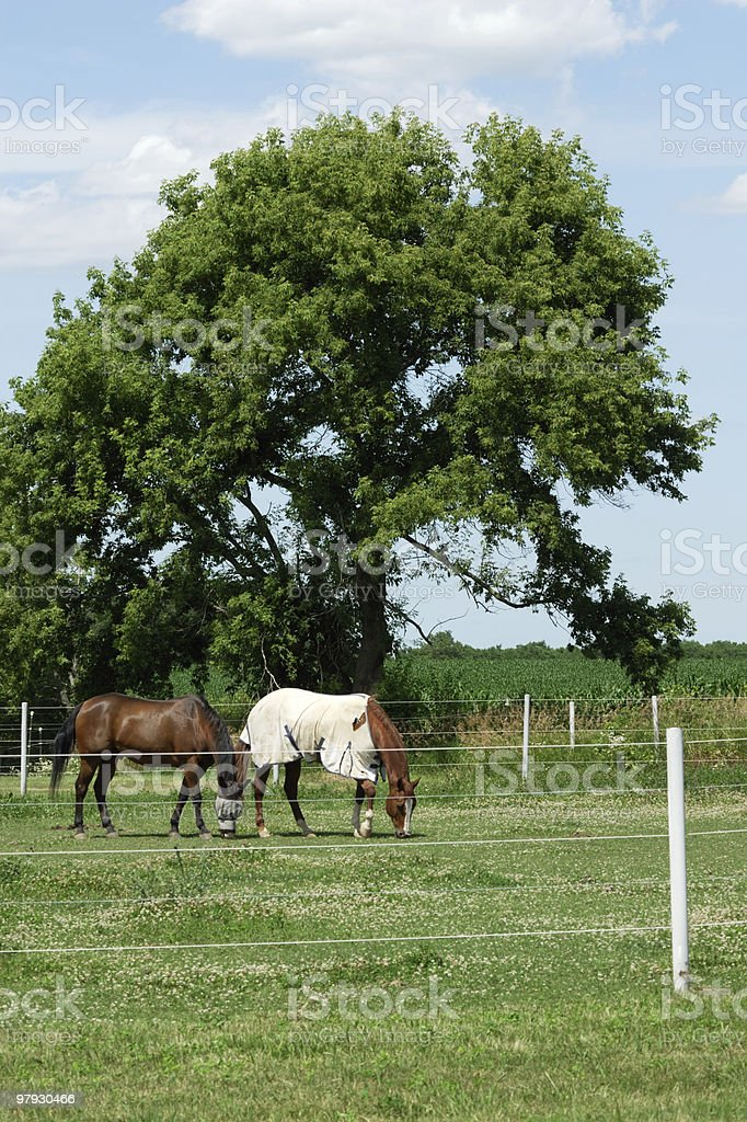 Blanket and Fly Mask royalty-free stock photo