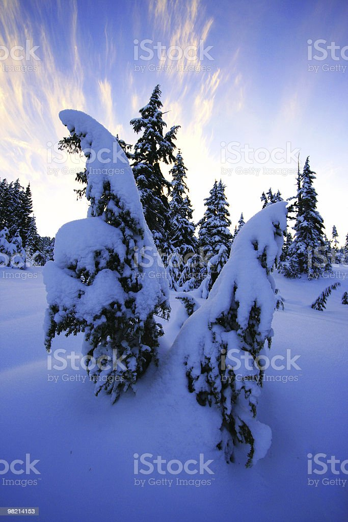 Blanket of Snow royalty-free stock photo