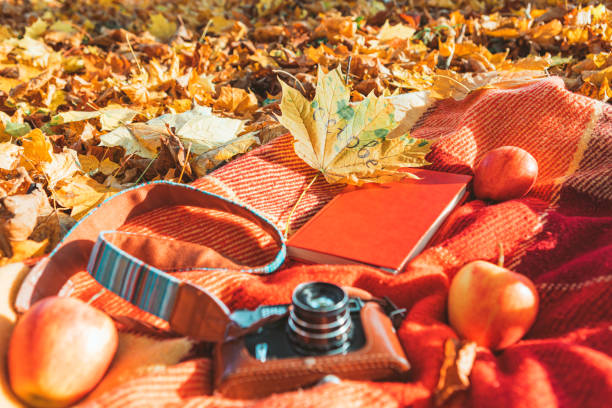 blanket with book and old retro camera on the ground in autumn public park stock photo