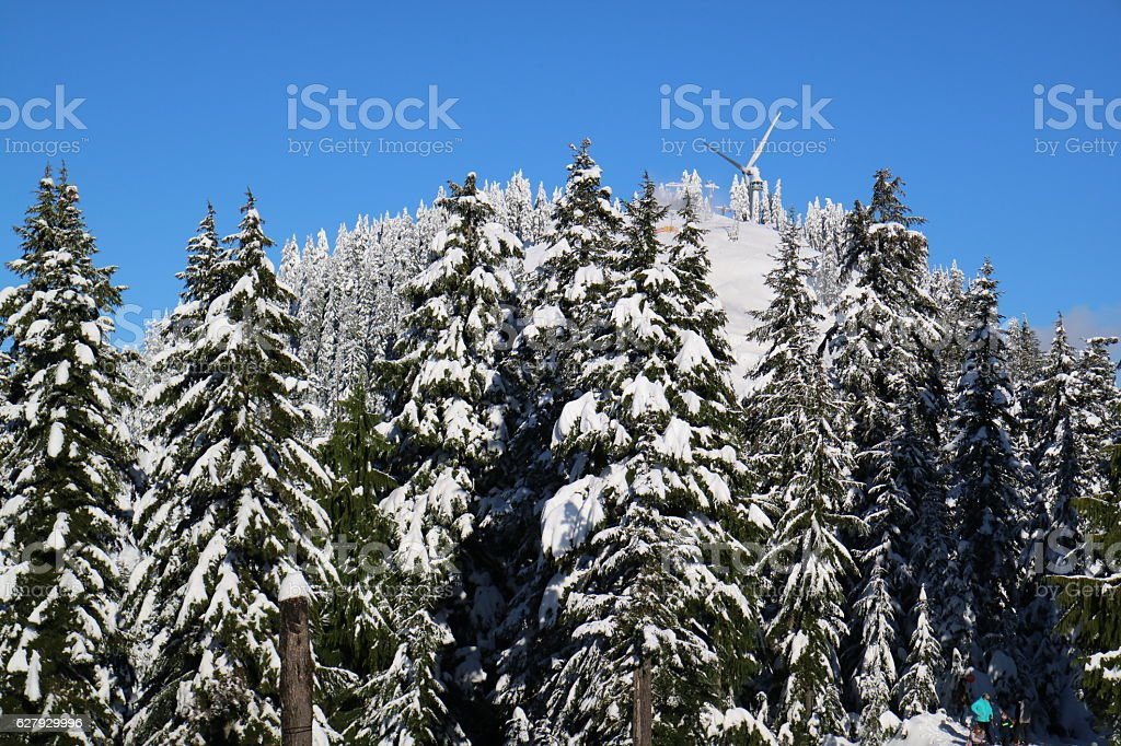 Blanketing of fresh snow on the Grouse Mountain – Foto