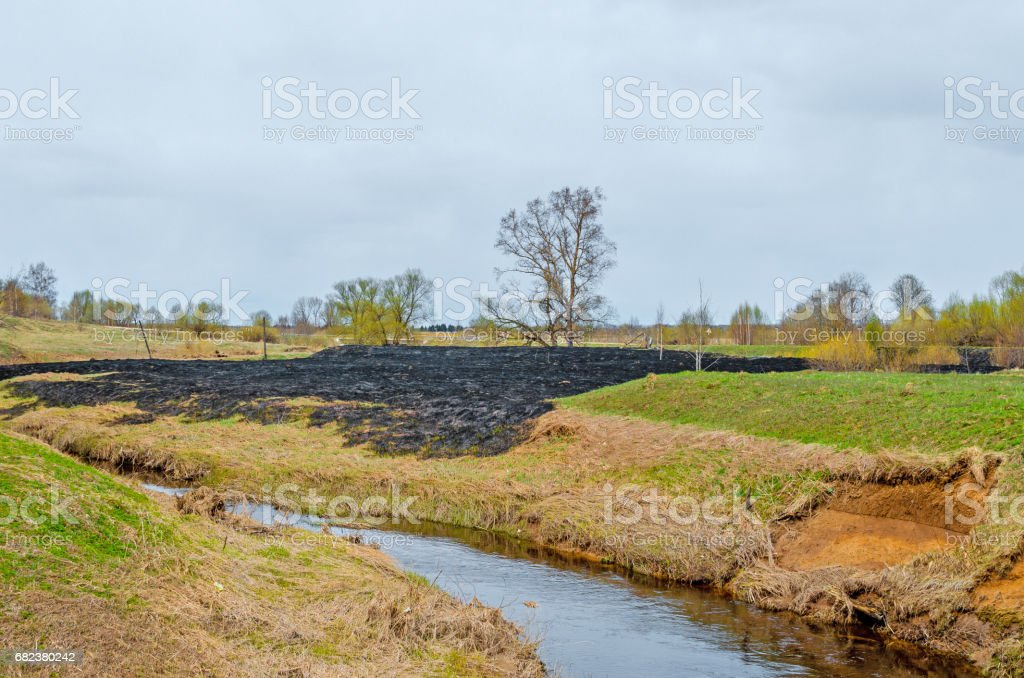 Blasted forest fire wasteland meadow on the bank of the river near the forest in the village. foto stock royalty-free