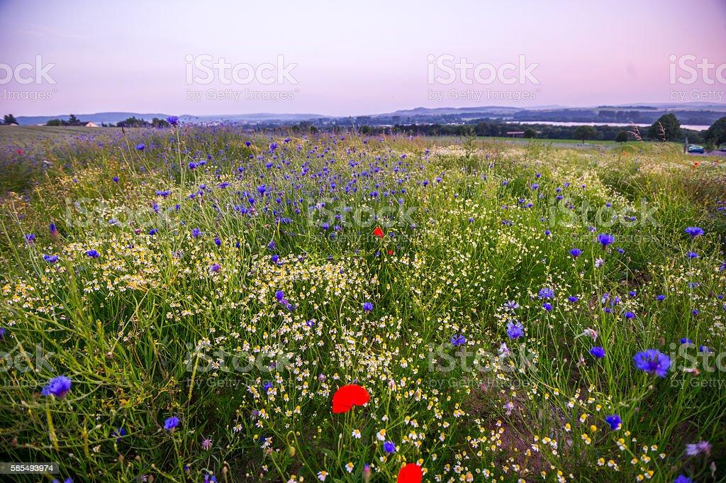 Blaue Stunde bei den Wildblumen stock photo