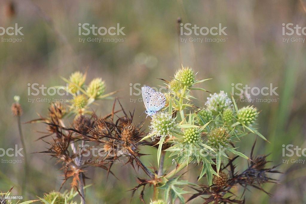 Blauer Falter stock photo