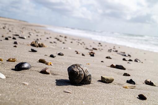 Blavand ist der westlichste Punkt Dänemarks, hier werden Bernstein Muscheln und andere Lebewesen an den Strand gespült