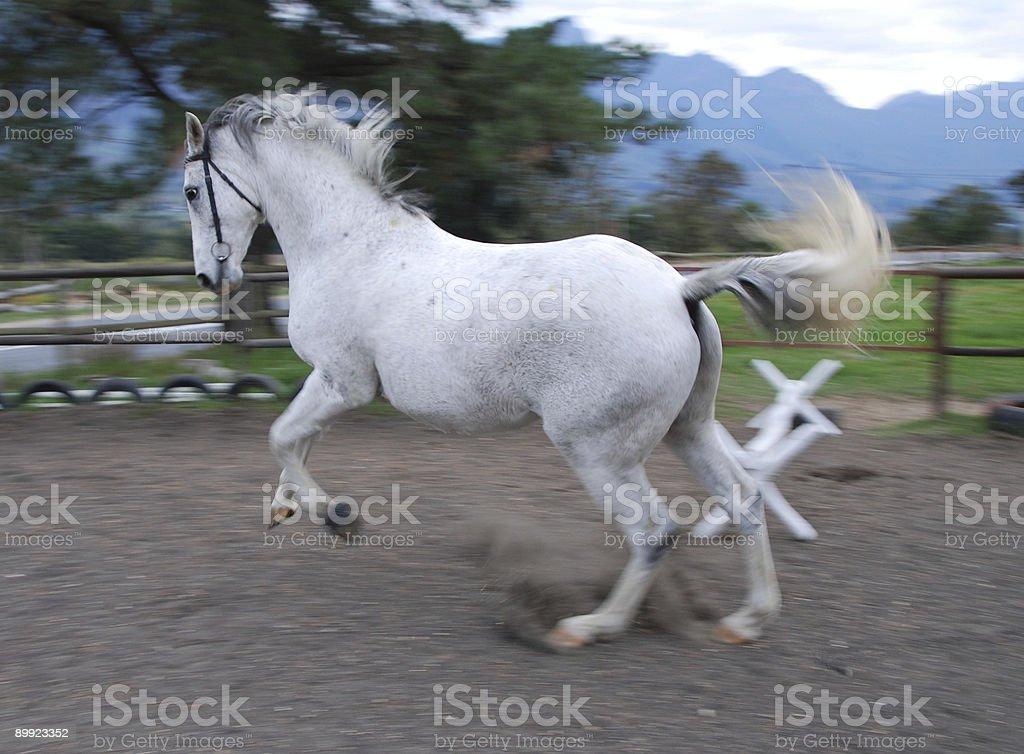 Blaze the horse royalty-free stock photo