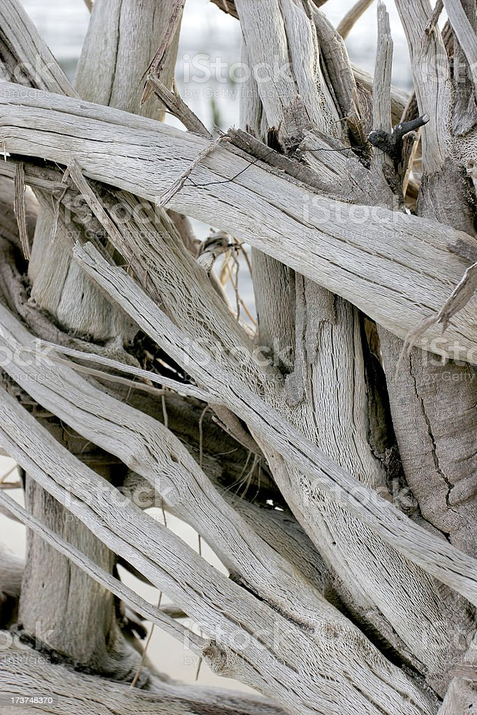 Bleached Beach Wood royalty-free stock photo