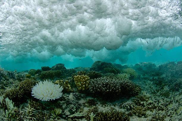 ausgebleichtes koralle unter brechenden welle - die toteninsel stock-fotos und bilder