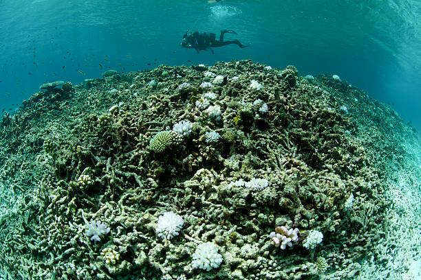 ausgebleichtes koralle mit einsamer taucher - die toteninsel stock-fotos und bilder