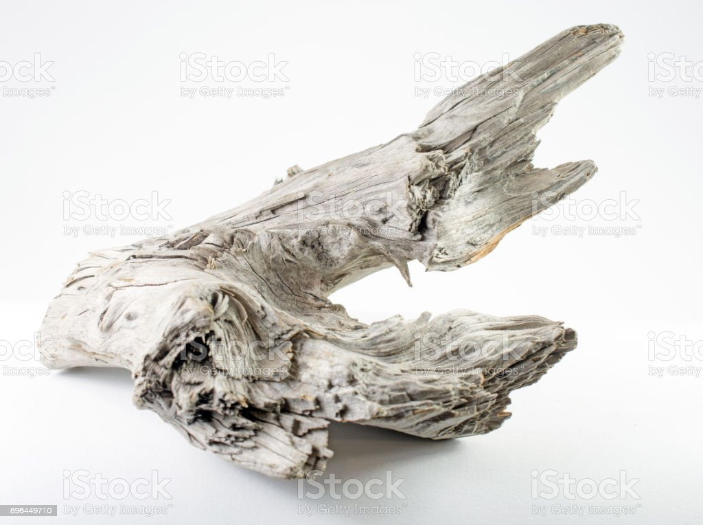 Bleached weathered driftwood on a white background stock photo