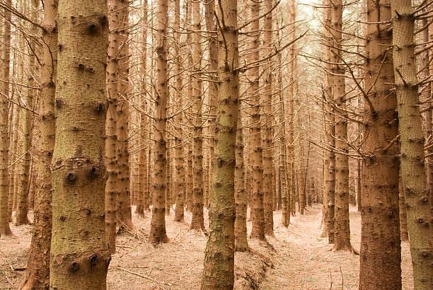 Bleak Forest in the Winter