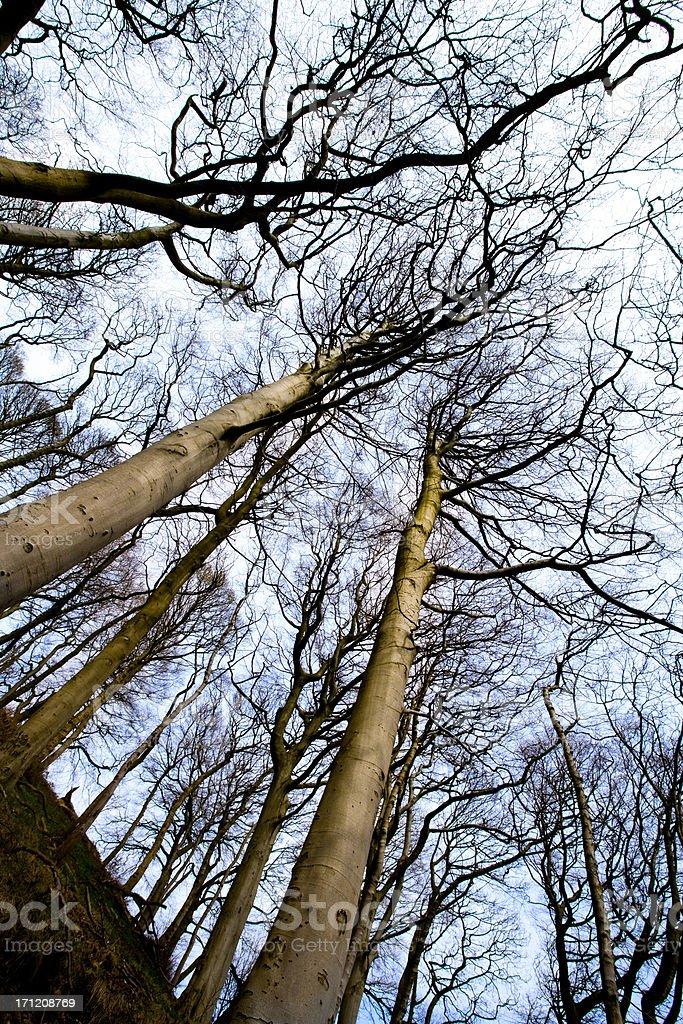 Bleak winter trees royalty-free stock photo