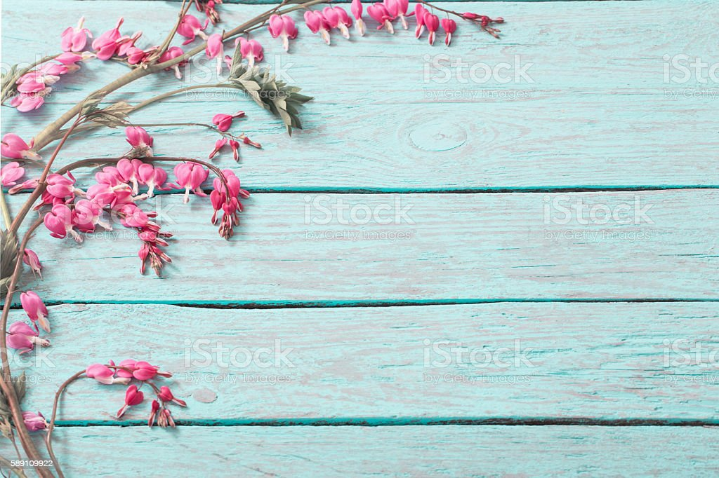 Bleeding heart flowers on wooden background stock photo