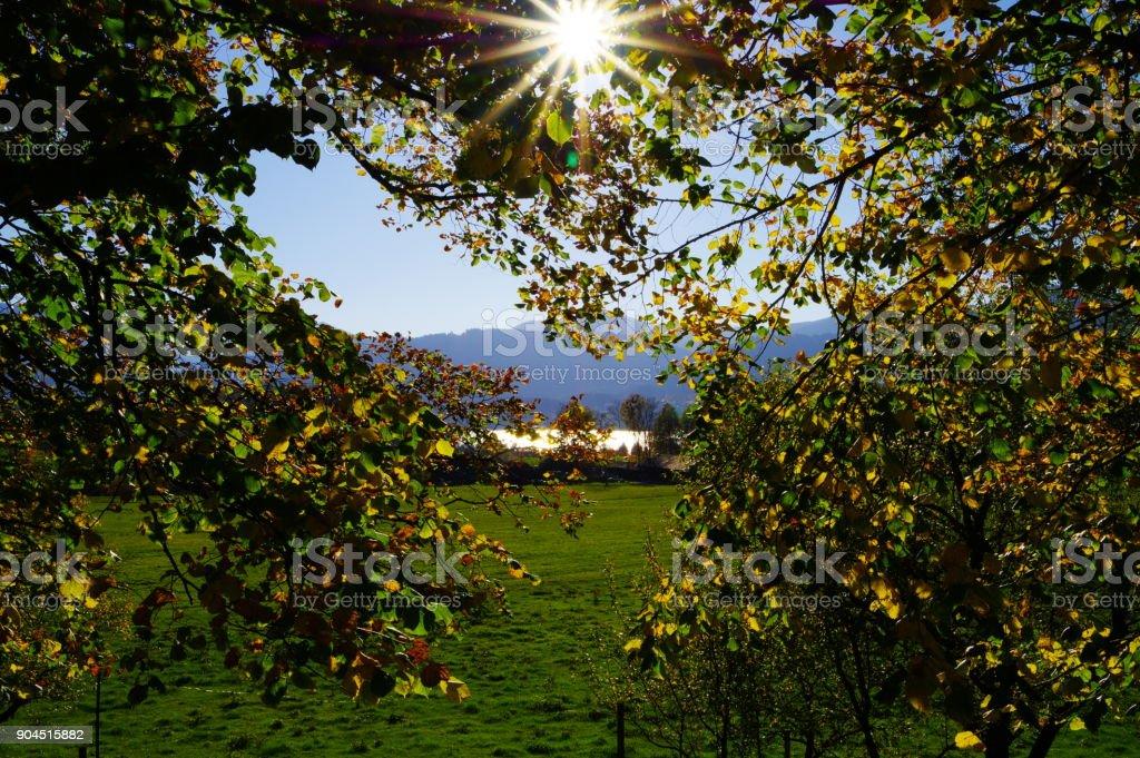 Blick durch Blattwerk in die Berge mit voller Sonne stock photo