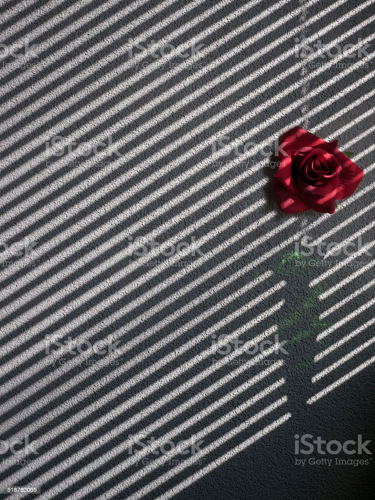 blind and green vase projection on a wall stock photo