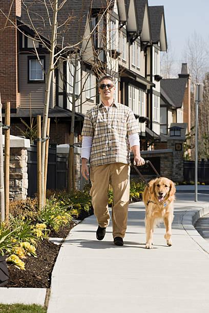 Blind man with a golden retriever stock photo