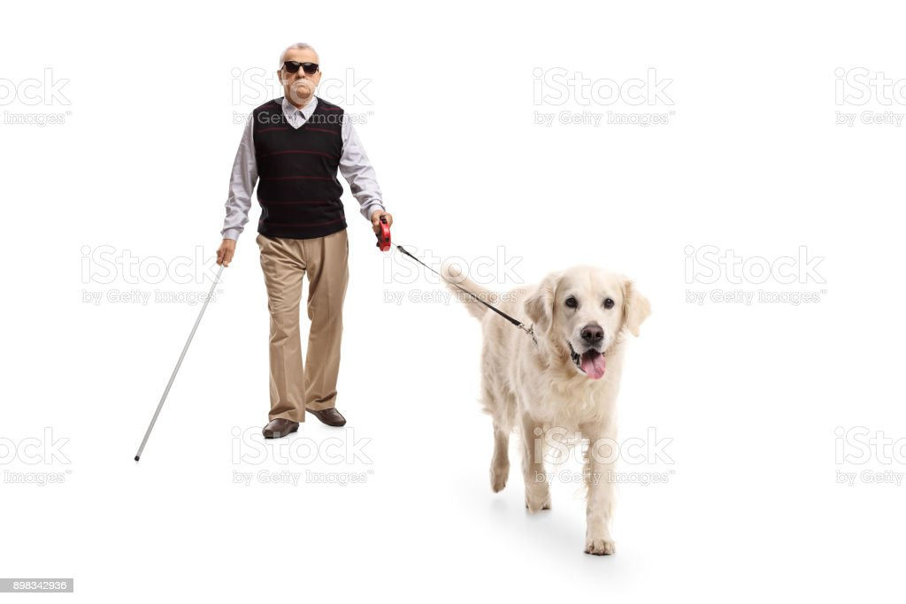 Blind mature man walking with a stick and a dog stock photo