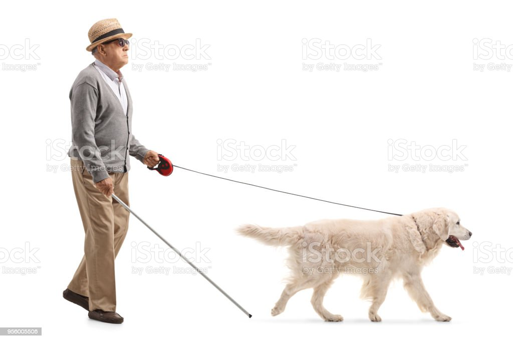 Blind mature man walking with the help of a dog stock photo