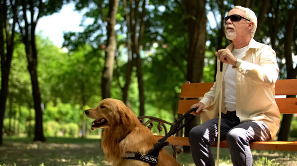Blind pensioner preparing to stand up from bench, holding guide dog to walk park Blind pensioner preparing to stand up from bench, holding guide dog to walk park persons with disabilities stock pictures, royalty-free photos & images
