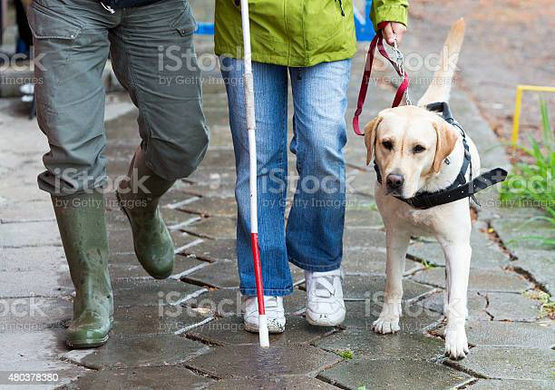 Blind person with her guide dog picture id480378380?b=1&k=6&m=480378380&s=612x612&h=6pymxo6ydrvlazhbzlyyio lcfemmjg0h9f4jy6p3go=