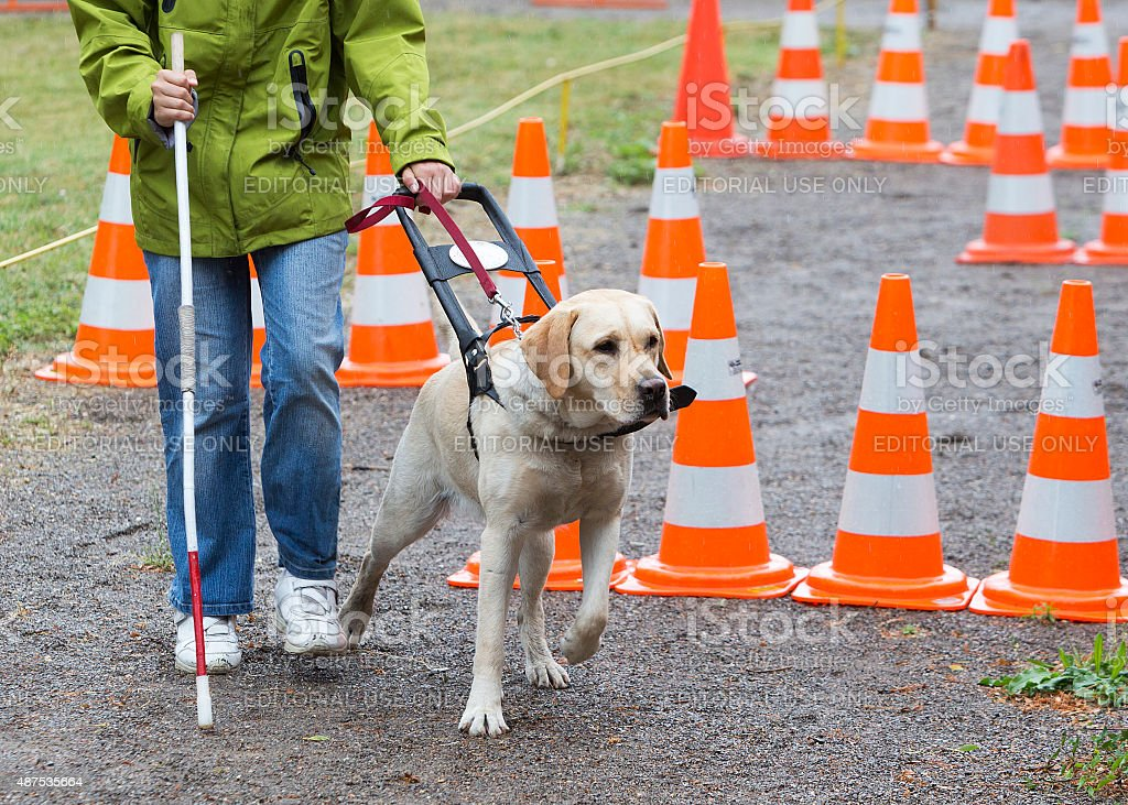 Blind person with her guide dog stock photo