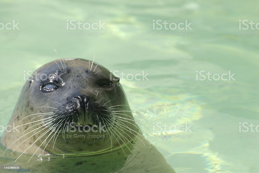 blind seal stock photo