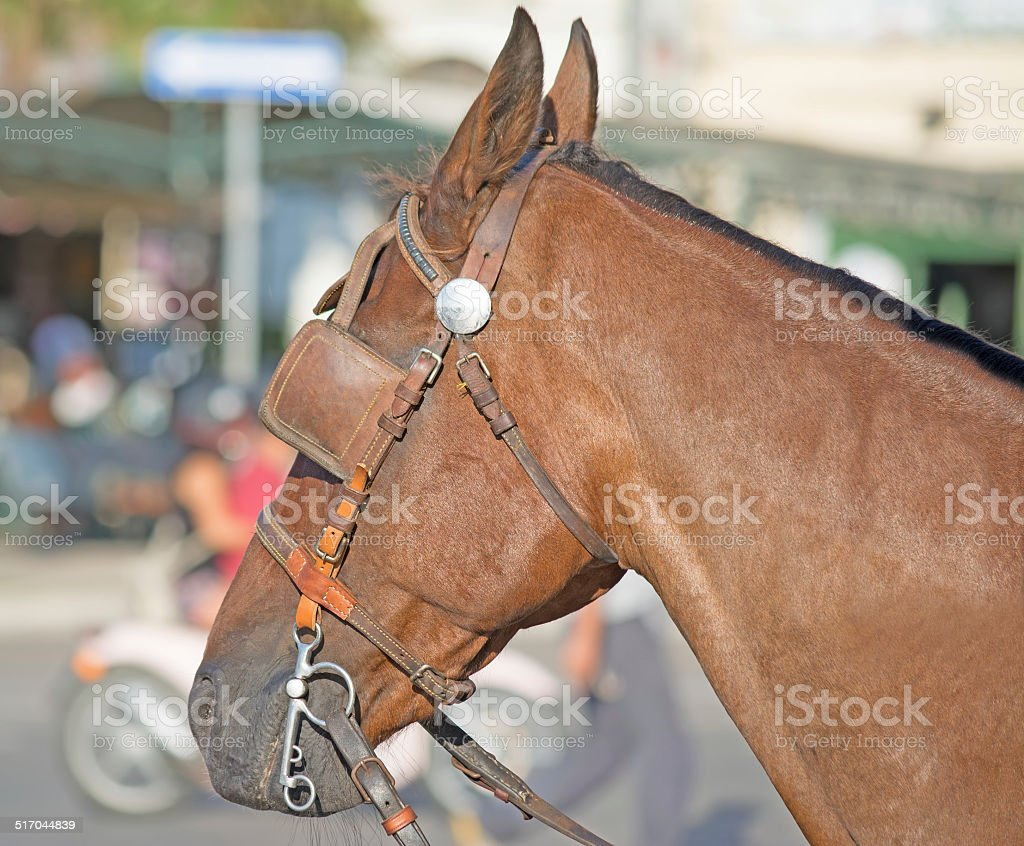 blinders stock photo