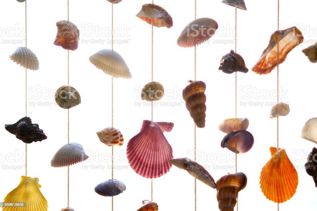 persianas o a la sombra de muchos tipos de shell en la sala para hacer un mar o sensación de la playa. - Foto de stock de Acuario - Recinto para animales en cautiverio libre de derechos