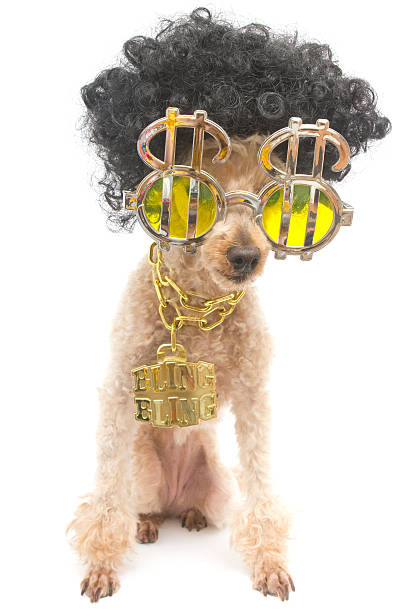 Bling bling poodle with big hair picture id464876797?b=1&k=6&m=464876797&s=612x612&w=0&h=6fieeh1dkabwulpyyiuxjbssuk3tnbgtwjxyq djed4=