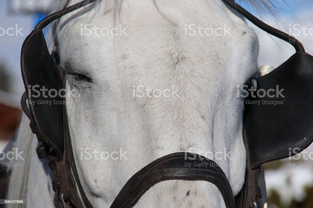 Blinkers, Blinders, Bridle, Horse Tack stock photo