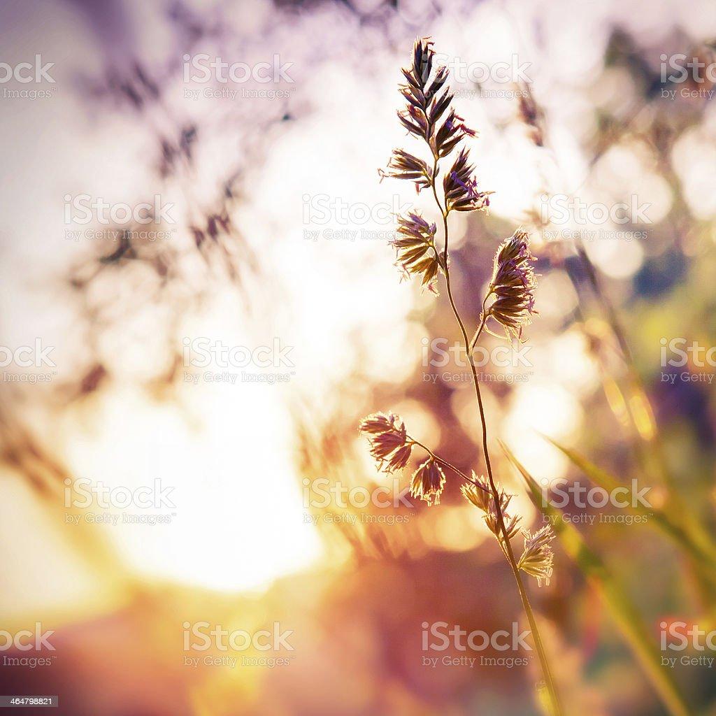 Bliss stock photo