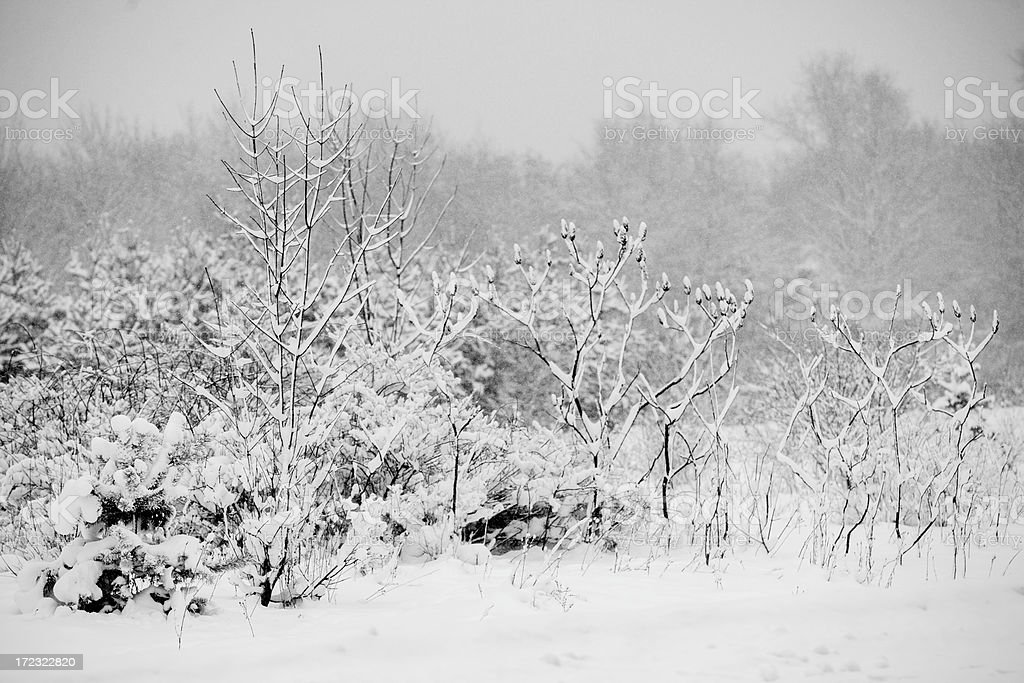 Blistery New York snowstorm cover the roads. royalty-free stock photo