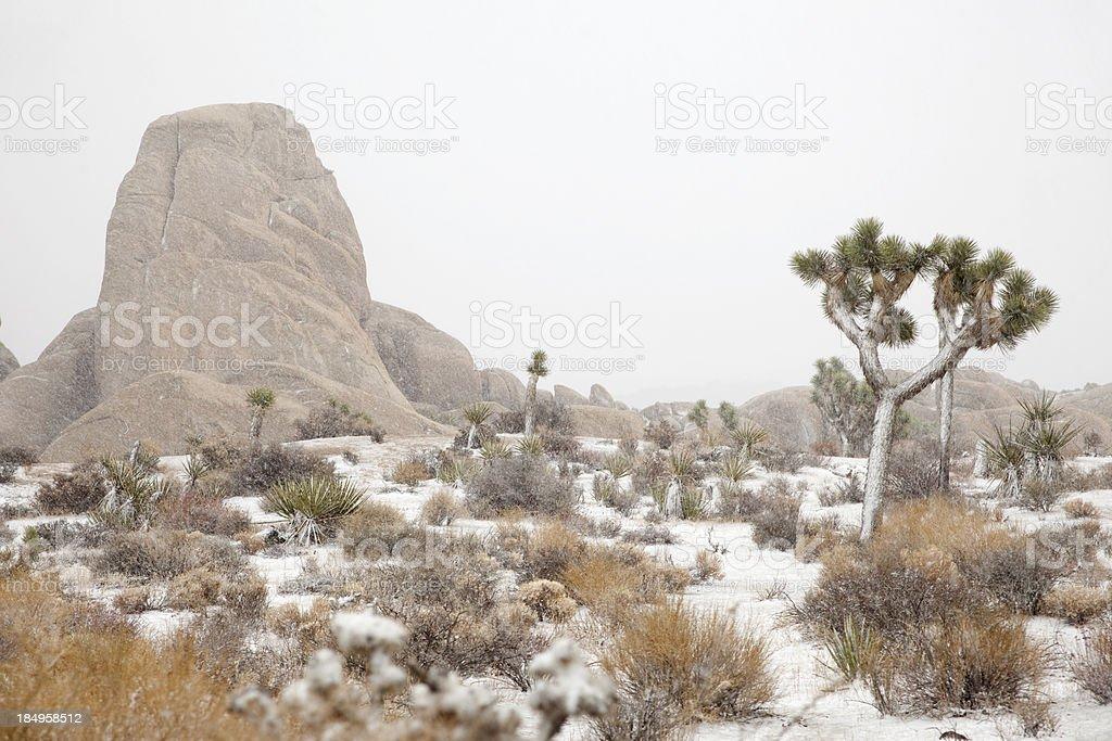 Blizzard In Mojave Desert Joshua Tree National Park