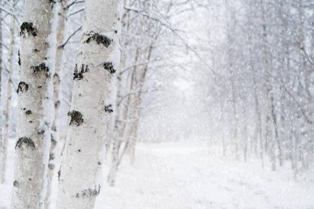 Blizzard in the winter park. stock photo