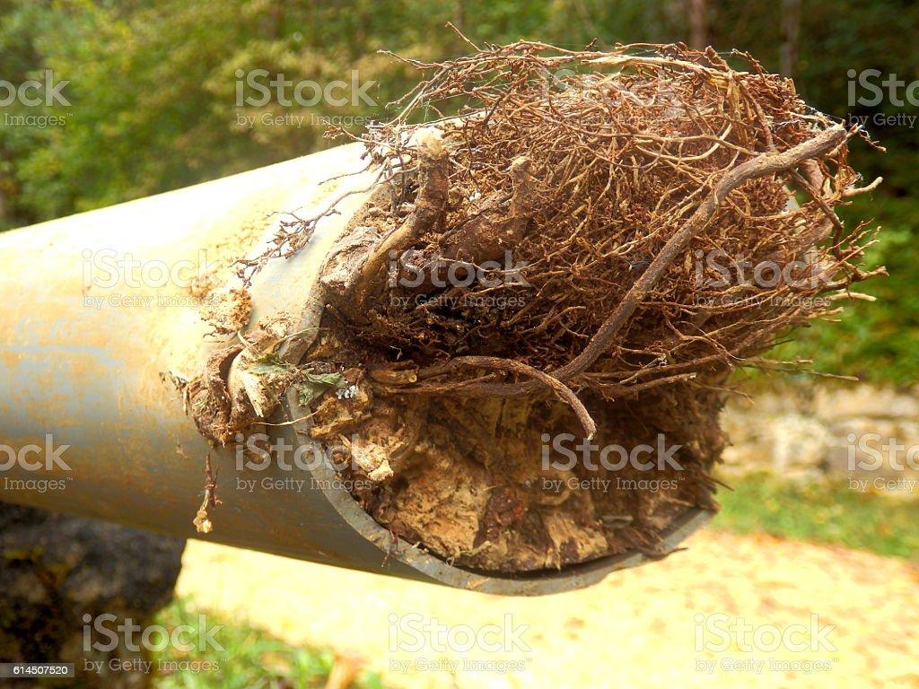 Blocked drainage pipe stock photo