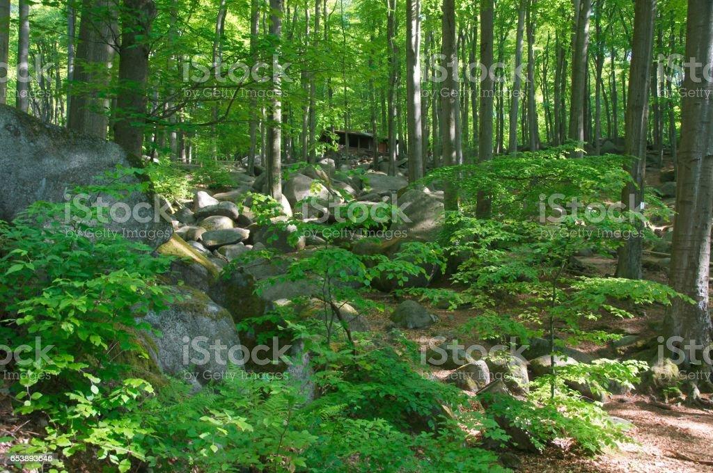 Blockfield (Felsenmeer)  in Lautertal-Reichenbach, Odenwald in summer stock photo