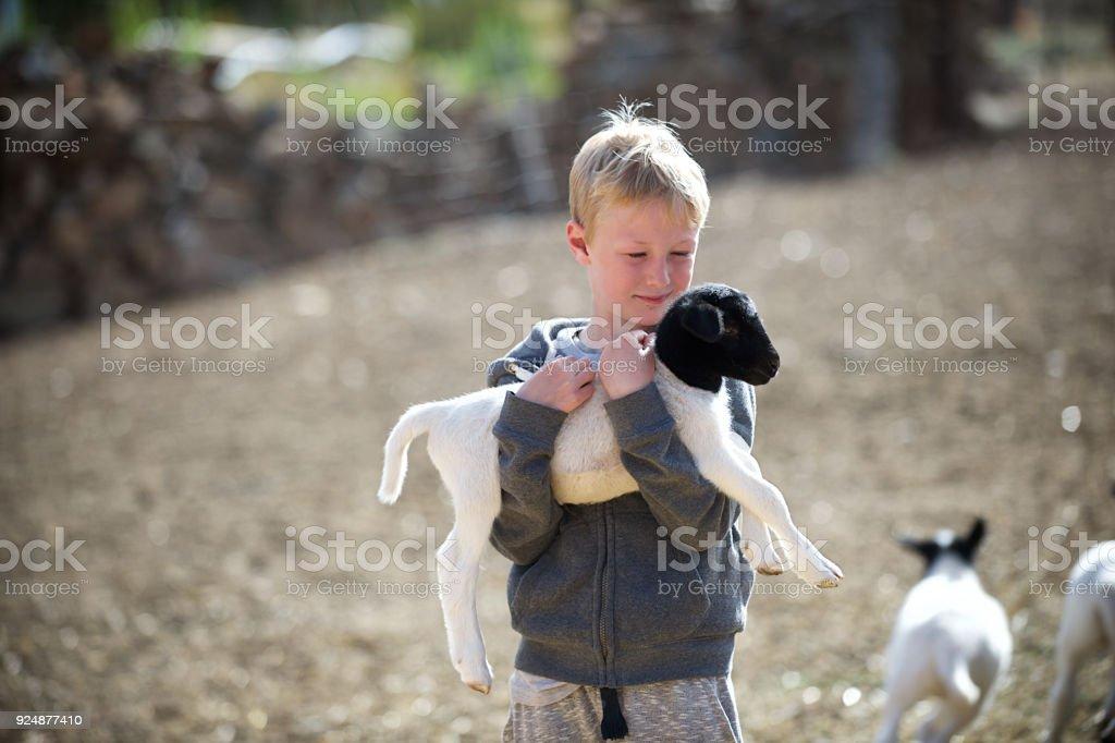 Garçon blond Holding et des caresses agneau - Photo