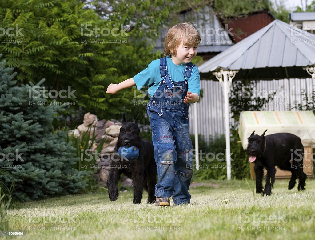 Blond child and couple of  dogs Riesenschnauzer with  ball stock photo